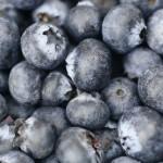 ブルーベリーの保存方法と保存期間 冷蔵と冷凍の場合はどれくらい違うの?