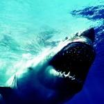 海のハンター展は夏休みのお出かけに最適、みどころと会場周辺の楽しみ