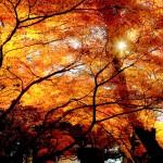 紅葉の写真のアングルと構図、撮り方と設定、撮影時間帯について