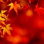 鳴子峡の紅葉の見頃時期と渋滞の回避方法、秋の気温と服装について