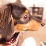飛行機に犬や猫などペットを連れ込むことは可能?預ける場合はどうする?(国内線)