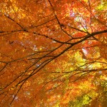 高尾山 もみじ台の紅葉 混雑する時間帯!見頃の時期に人混みを避けるには?