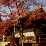 本土寺の紅葉時期の駐車場、お土産屋とお食事処のおすすめ
