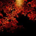 養老渓谷の2016年11月23日時点の紅葉状況。見ごろはいつ頃? ライトアップはいつまで?